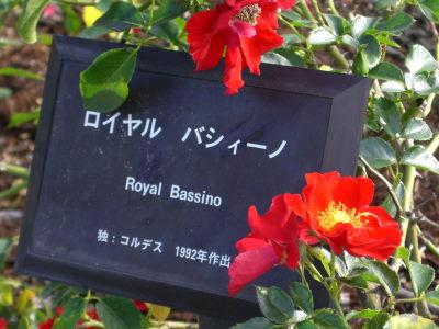 ロイヤル バシィーノ1.JPG