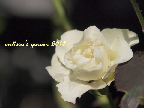 PA300187.JPG
