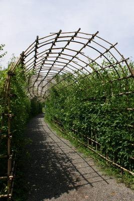 萩のトンネル2.JPG