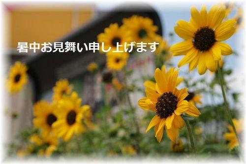 P6283173暑中.JPG